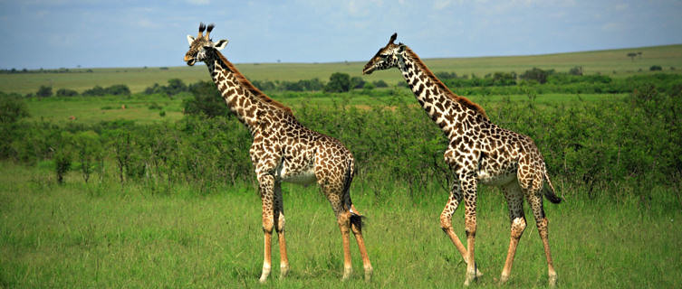 Kenya's Domestic Tourism & Conference Tourism; Team Building Events for Company Staff, Schools & Colleges and Planning Conferences, Conventions and Company Events & Meetings