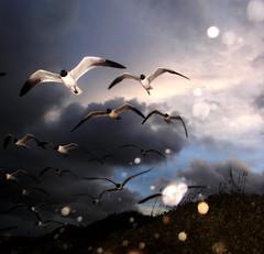 Squawk (Jason A. Samfield) Tags: sunset sky cloud seagulls bird beach beautiful rain birds clouds fly flying wings twilight paradise skies texas wind seagull gull gulls hurricane flight wing bluesky formation blueskies winds wingspan hurricanes seabird seabirds skyblue squawk sorties squawking troubleinparadise squawks rainbands squawked bandsofrain