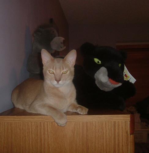 Pharaoh & Bagheera