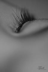 Eyelashes (Troy Jack) Tags: macro eyelashes