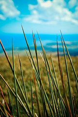 Grass (MakeLifeMemorable) Tags: life blue man green make grass islands photo emily 1987 sony may example spencer alpha isle channel manx memorable a230 snaefell muhly makelifememorable lonegungrrly