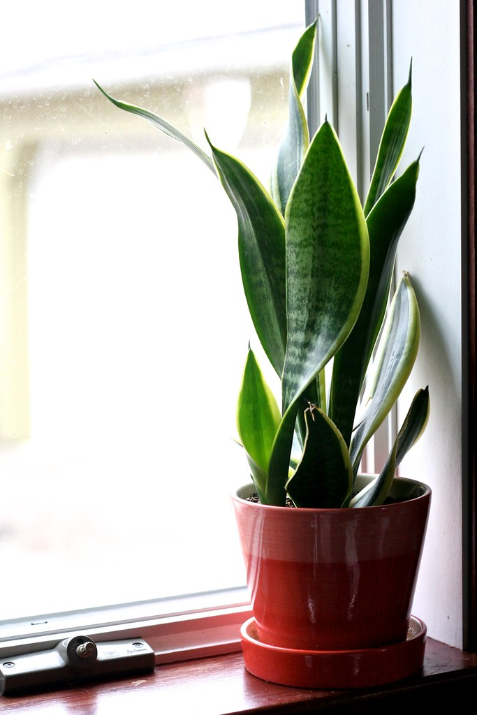 Houseplant and Clean Air