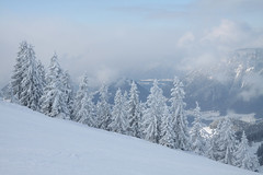 Snow Trees (Thowra_uk) Tags: winter snow ski mountains alps tree nature clouds landscape fun view autria