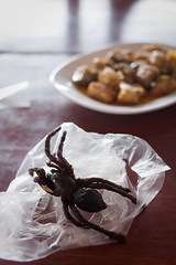 Let's eat a spider (Florent Lanquetin) Tags: voyage city travel tourism insect spider fry asia cambodge cambodia meal phnompenh asie southeast ville insecte tourisme frit repas arraigne mygale sudest commestible