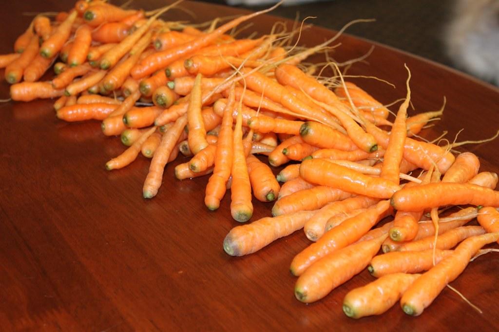fingerling carrot bounty