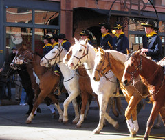 The U S Calvary Rides through Town (Colorado Sands) Tags: horses horse usa boys america caballo cheval us teams colorado unitedstates military teenagers teens parades denver parade explore males cavalos uniforms amerika pferde cavalli cavallo equestrian kuda riders calvary chevaux  nationalwesternstockshow 17thstreet youngmen westernaires milehighcity explored nationalwestern atlar sandraleidholdt stockshowparade uscalvary cityandcountyofdenver leidholdt sandyleidholdt