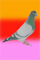 Pigeon. (ilahgla@hotmail.com) Tags: colour london art college fashion thames youth photoshop work print design interesting shoes university hand message graphic bright arts young shapes inspired screen sketchbook pop richmond trainers foundation communication adobe medium reuben illustrator youthful ba drawn letterpress popular printed bournemouth vector clever upon degree honours teenage detailed indesign fashionable lcc aucb alghali