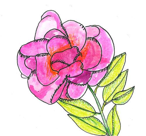 A pink doodle rose