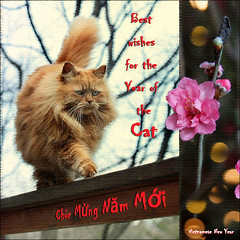 Chc Mng Nm Mi (NaPix -- (Time out)) Tags: cat action newyear vietnam hanoi dao greetingcard lunar catwalk hoa chcmngnmmi napix ttnguynn vietnamesenewyearofthecat hoaott inthevietnamesezodiacthecatreplacestherabbitinthechinesezodiac chinesenewyearoftherabbit chucmungnamoi chcmngnmmimotamth