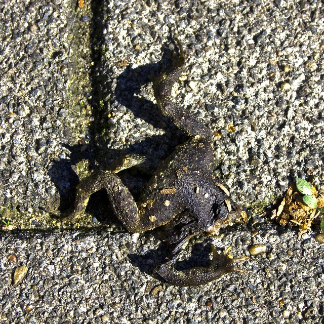 froglegs