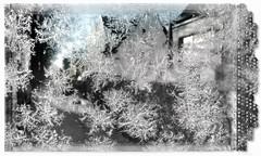 eiszeit (Brigitte ) Tags: winter frost eis eisblumen iceflowers