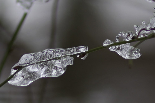 Ice - IMG_4834ax1