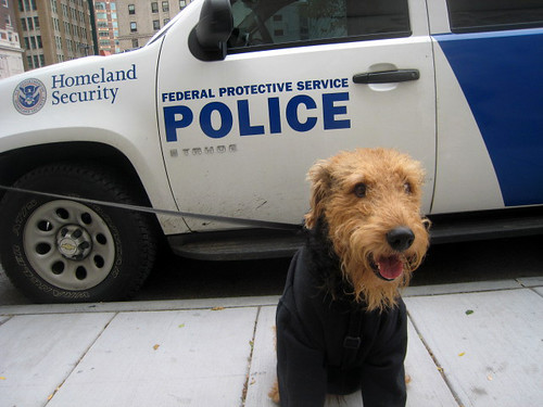 Airedale Homeland Security