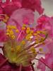 Androceo e gineceo (Valter França) Tags: planta feminino gineceo masculino orgão androceo angiospermas