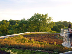Fayetteville library's green roof (by: MadAboutCows/Sarah, creative commons license)