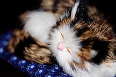 Sleepy cat close-up (J. E. Gonzalez) Tags: portrait musician macro cat doll dolls nikkormicro105mmf28 micro105mm
