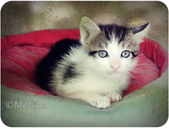 Ojos del cielo! (MeluRogi) Tags: sky cute green beautiful cat eyes kitten sweet adorable ojos gato cielo sweetheart hermoso lovely verdes dulce gatito amoroso primor mygearandme mygearandmepremium mygearandmebronze mygearandmesilver mygearandmegold mygearandmeplatinum mygearandmediamond