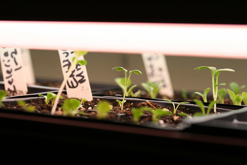 seedlings 014