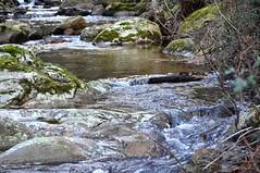 Piste forestière du San Petru : ruisseau du San Petru au retour