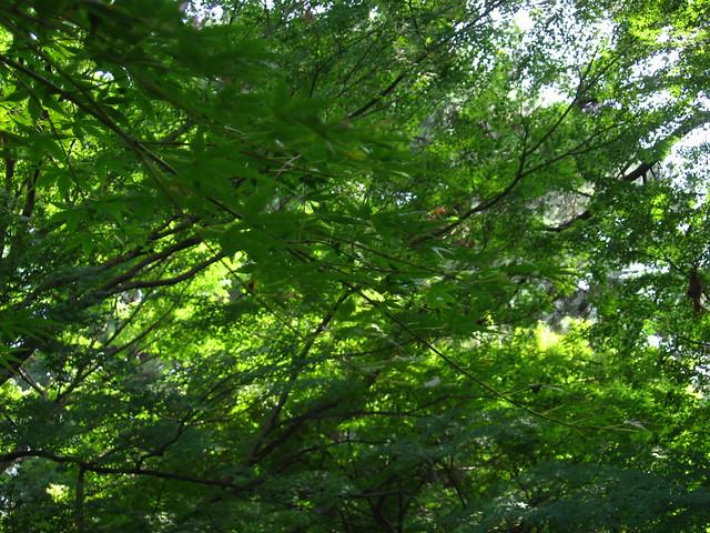 木の茂みのフリー写真素材