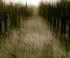 departure (Timoleon Vieta II) Tags: blur loss dark landscape selftaught departure newhorizons timoleon