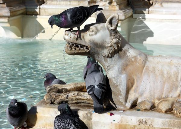 statue_pigeons