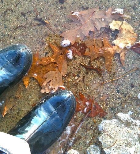 ah, puddle