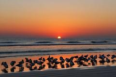 Daytona Beach Shores (noshoes) Tags: beach inn resort hawaiian daytona shores