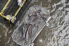 fish river lock dam columbia bonneville sturgeon usarmycorpsofengineers portlanddistrict