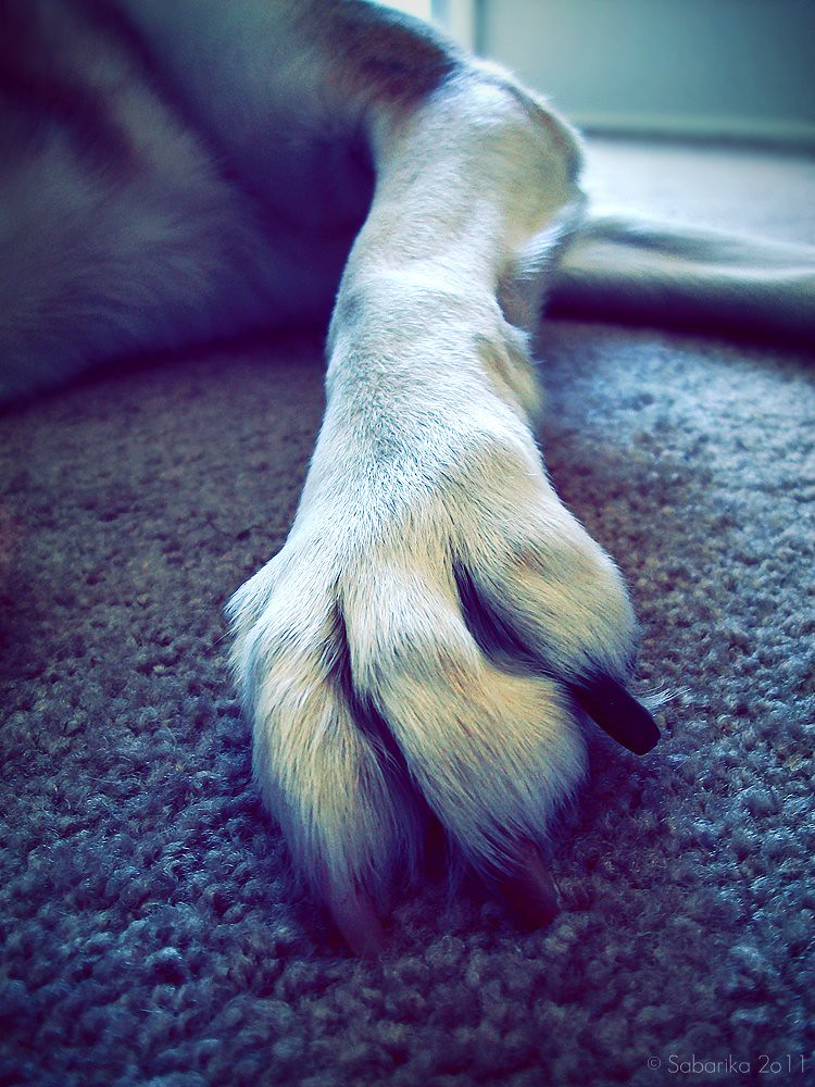 8 / 52 these paws were made for walkin'
