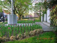 Greenwich, Connecticut veterans monument by Michael Scott (Visit Holland) Tags: flowers spring tulips tulip justbe readyforspring visitholland