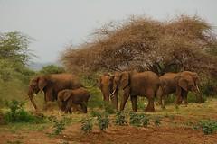 DSC_0176 (Fausto Basile) Tags: africa park lake nature animals tanzania natura national animali manyara elefanti
