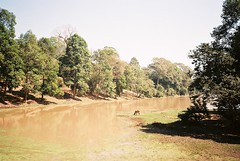 near angkor thom south gate (jamiehladky) Tags: horse brown tree water animal river temple bride cow gate cambodia cambodian south drinking super olympus 200 temples reap thom angkor wat xa3 siep uxi jamiehladky hladky efiniti