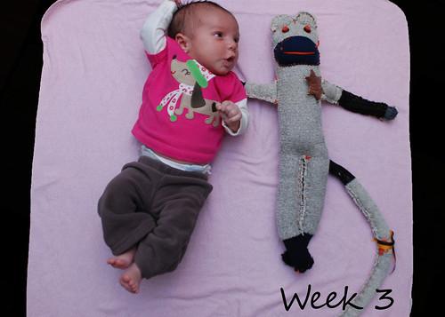 Week 3 - February 26, 2011