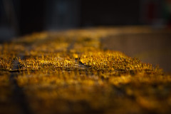 #57/365 - A touch of sunlight (Dennis Burger) Tags: sun holland netherlands amsterdam stone wall closeup golden moss glare dof bokeh thenetherlands zuidholland canon50mm nld project365 canon450d pontanusstraat
