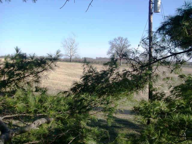 tree climbing 024