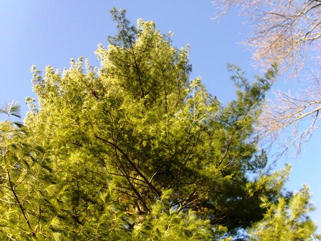 tree climbing 003
