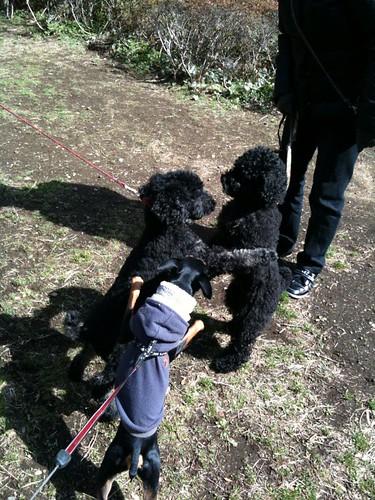 クロプーがきて、締め出された黒犬。