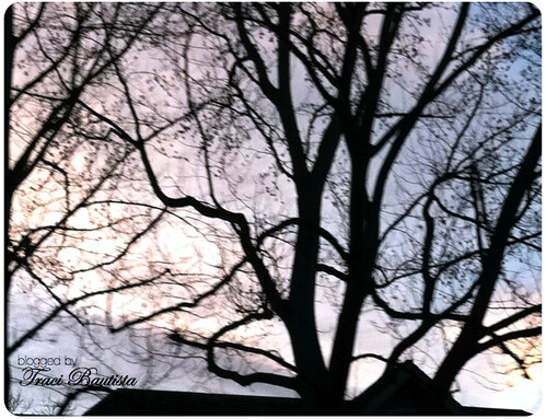 a drive by photo of tree branches at sunset