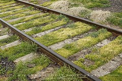 Grassy Spur (RichardRuddle) Tags: railroad mill canon ties spur virginia track culpeper rail feed norfolksouthern 50d