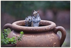 I'm Alright, Don't Nobody Worry Bout Me! (Lane Rushing) Tags: nikon squirrel bokeh d200 thumbsup shallowdof bigmomma 70200mmf28 herowinner storybookwinner
