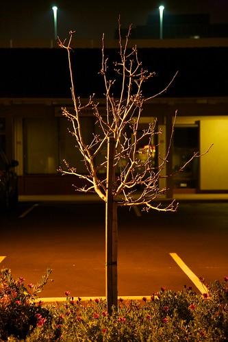 IMAGE: http://farm6.static.flickr.com/5220/5508039311_aafe45bdb1.jpg