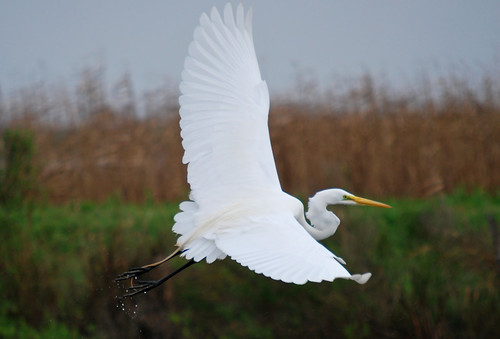 BirdingLouisiana-09