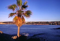 lj_16 (SamOphoto2011) Tags: california sandiego kodak cove lajolla ektachrome100 om1 olympusom1