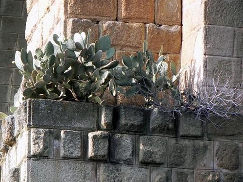 Higueras, chumberas... la vegetación crece abundantemente en los pilares del puente (Foto: Ignacio Verdejo)