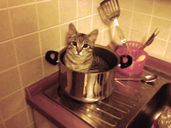 Don't cook me...please! (www.andreaalbertino.com) Tags: pet kitchen cat kitten samsung pan gatto gatti cucina micio tigro pentola pisica funnyimages andreaalbertino whyamsea88 gattonellapentola