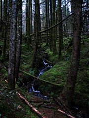 """Forest walk by Portree (nz_willowherb) Tags: winter skye wet woodland see scotland moss tour walk visit portree dank to"""" """"go"""