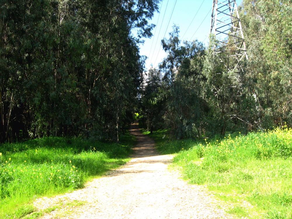12-03-2011-quite-path