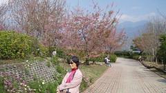 2011 0313 清境_3 by jackchen40
