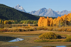 Teton Autumn Colors (bhophotos - not for much longer) Tags: travel trees usa mountains nature water yellow reflections landscape geotagged golden nikon aspens wyoming nikkor tetons grandtetonnationalpark gtnp oxbowbend cathedralgroup 80200mmf28dnew d700 rockchuckpeak bruceoakley